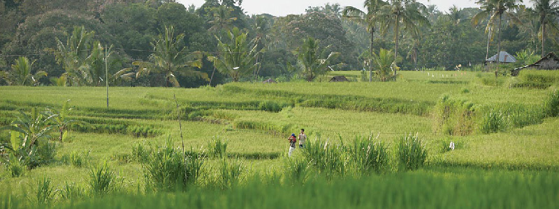 Trekking through ricefields and getting to know the Balinese village life